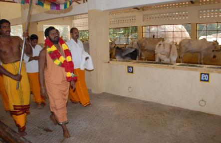 Gho Puja and Yagam in the Ghoshala at Sripuram